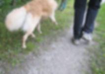 KAT Walk(c)experience.tirol.jpg