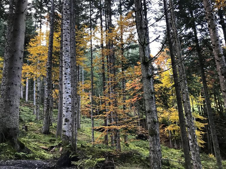 Herbstzeit Ellmau(c)experience.tirol_foto M.Herovitsch (kl).jpg