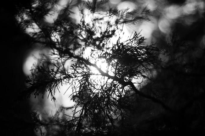Nature's Veins