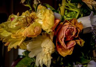 uitgebloeide bloemen