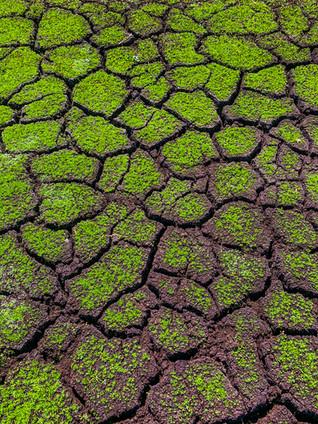 droog weiland