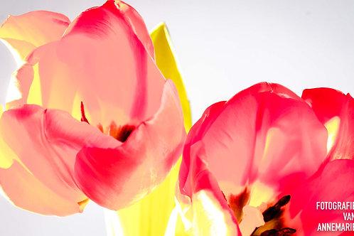 tulpen kunst