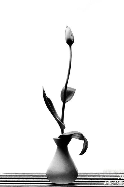 Tulp, minimalisme