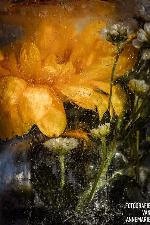 Frozen flowers2