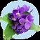fragrance-note-violet.png