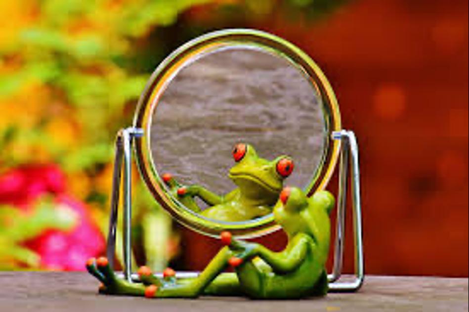 Frog looking at itself in mirrie