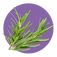 fragrance-note-rosemary.webp