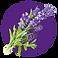 fragrance-note-lavender.webp
