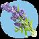 fragrance-note-lavender.png