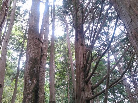 歴史を超える森林の時間