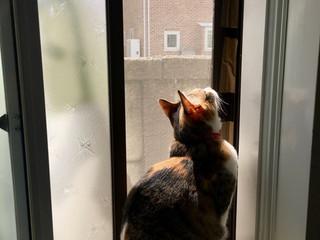 窓辺のなごみ