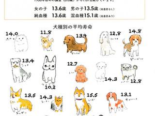 東京で暮らす犬の平均寿命