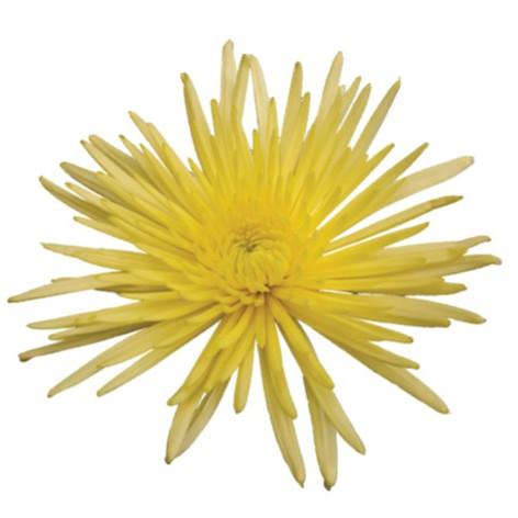 fuji, yellow