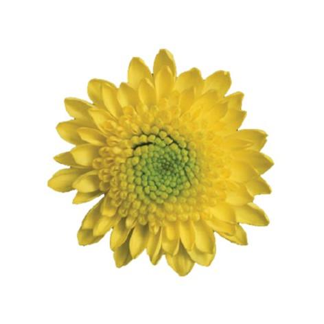 button, yellow