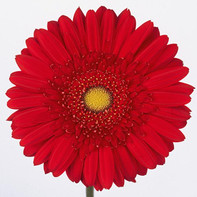 red, clear center