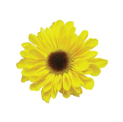 daisy, vyking