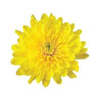 cushion, yellow