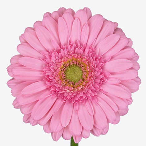 pink, clear center