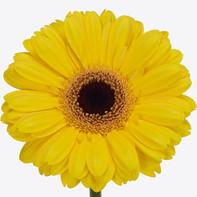 yellow, dark center