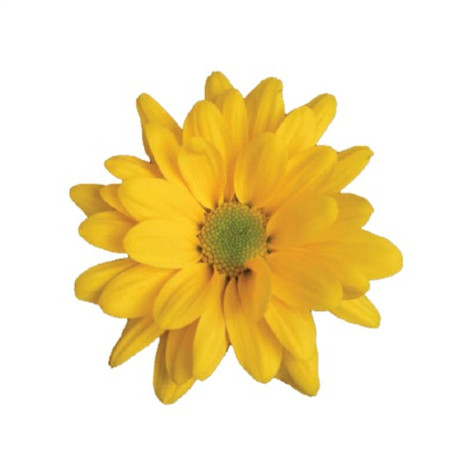 daisy, yellow