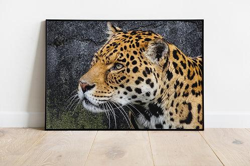 Majestic Jaguar Print