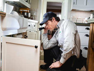 The secret places pests are hiding in your home