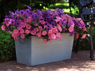 5 top trends in container gardening