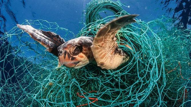 Sea Turtle .jpg