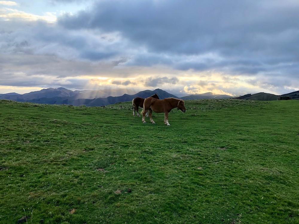 Deux chevaux Pottoks à Roncevaux sous un ciel chargé