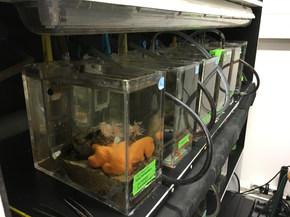 Petits aquariums de recherche à l'UPMC
