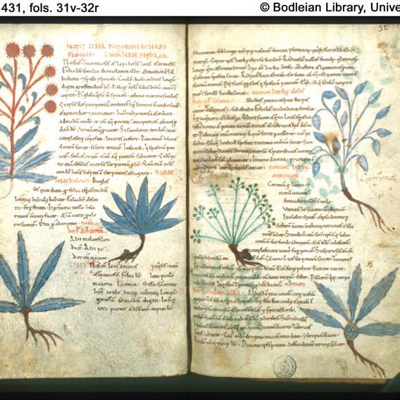 botany2.jpg_w=863&h=1&crop=1.jpg