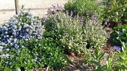 arbustes et vivaces