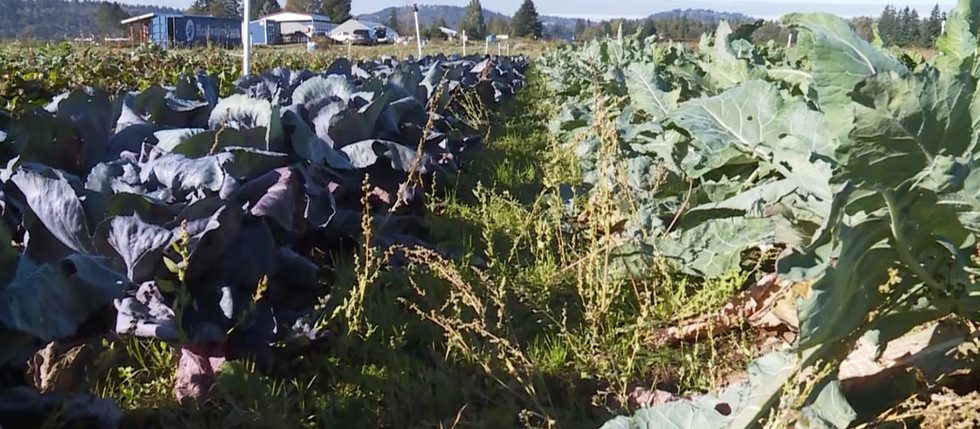 Where We Live: Local CSA farms thrive in pandemic