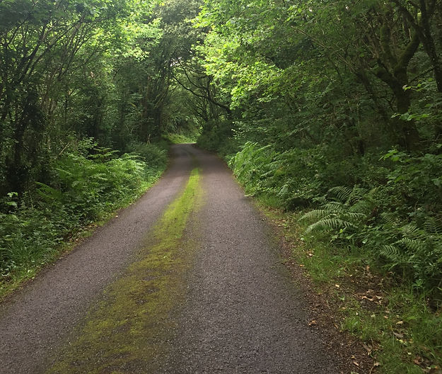 This is a scene of a long narrow country lane with lots of trees and ferns growing on each side