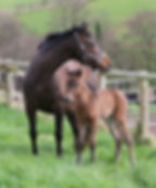 Perla with 2017 filly foal day one e.jpg