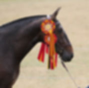 Neri head with rosettes.jpg