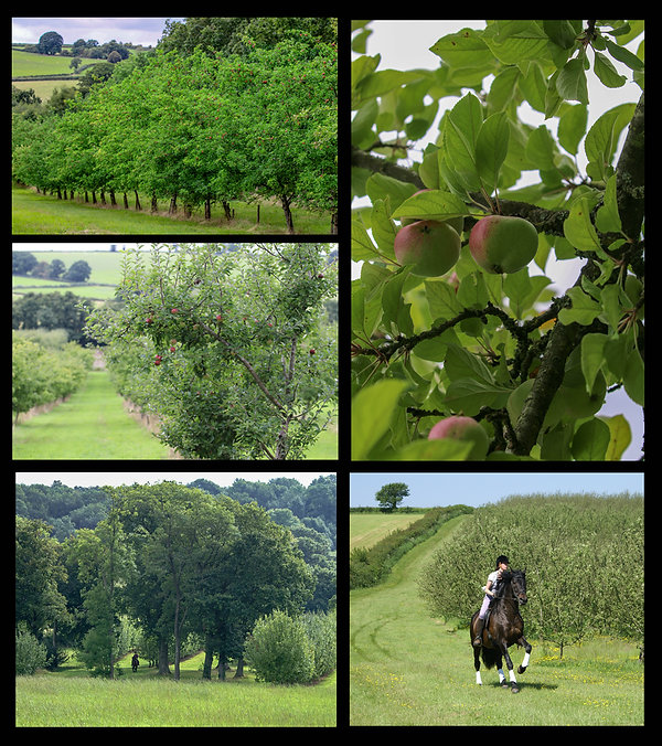 Orchard and horse.jpg