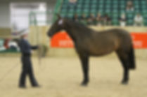 Jareta Reinera Breed Show with Sam Pick