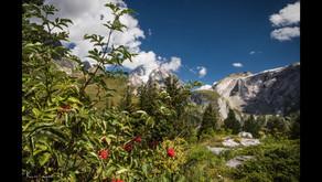 Les Alpes en été - Pralognan-la-Vanoise