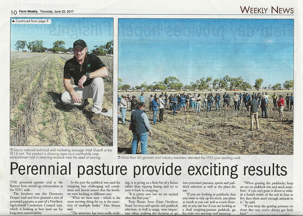 Perennial pasture provide exciting results