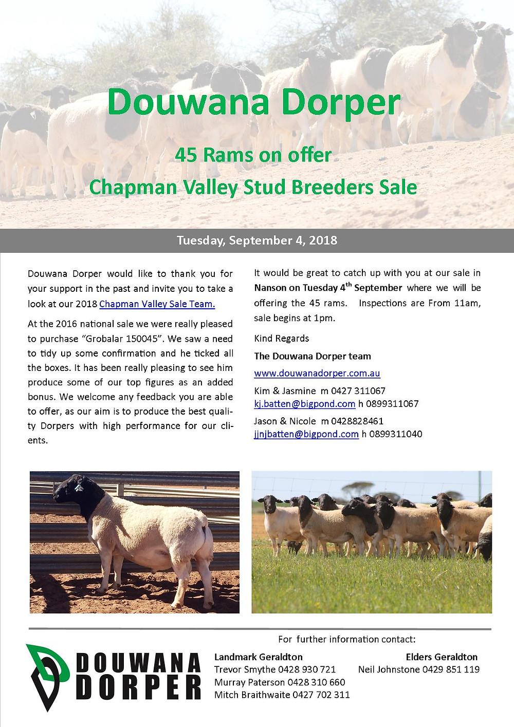 Chapman Valley Stud Breeders Sale - Douwana Dorper