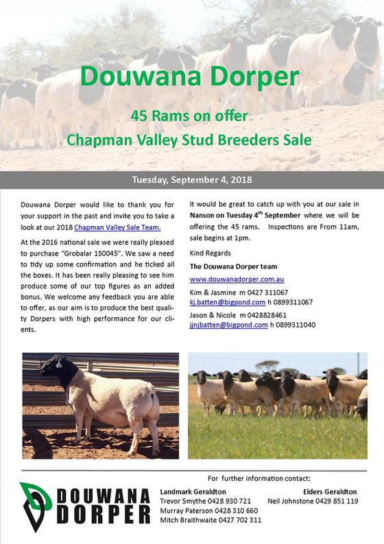 Chapman Valley Stud Breeders Sale is just around the corner