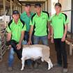 Dorpers top Stud Breeders Sale