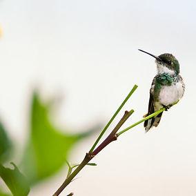 white-and-black-bird-on-plant-826410_edi