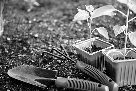 Gardening_edited.jpg