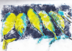 Tabarka les poissons jaunes