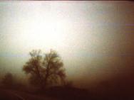 """Trace 0011"" Traces Disposable camera, 35 mm color film, Photo print"