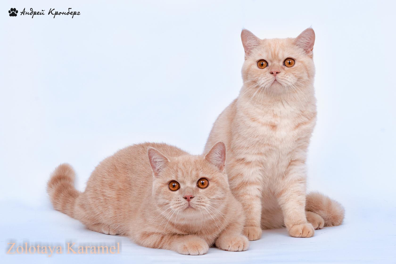 Каспер и Сараби