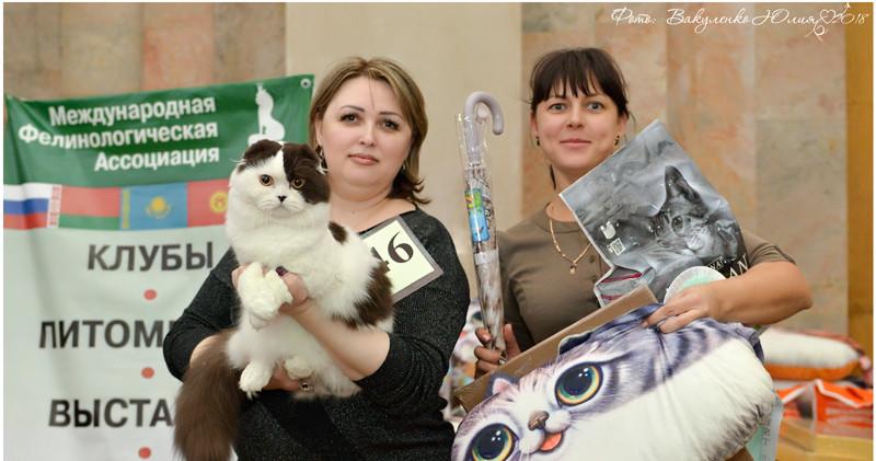 Best cat 1.jpg