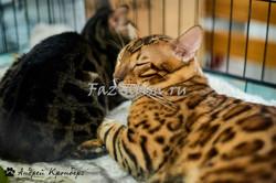 Почти леопард
